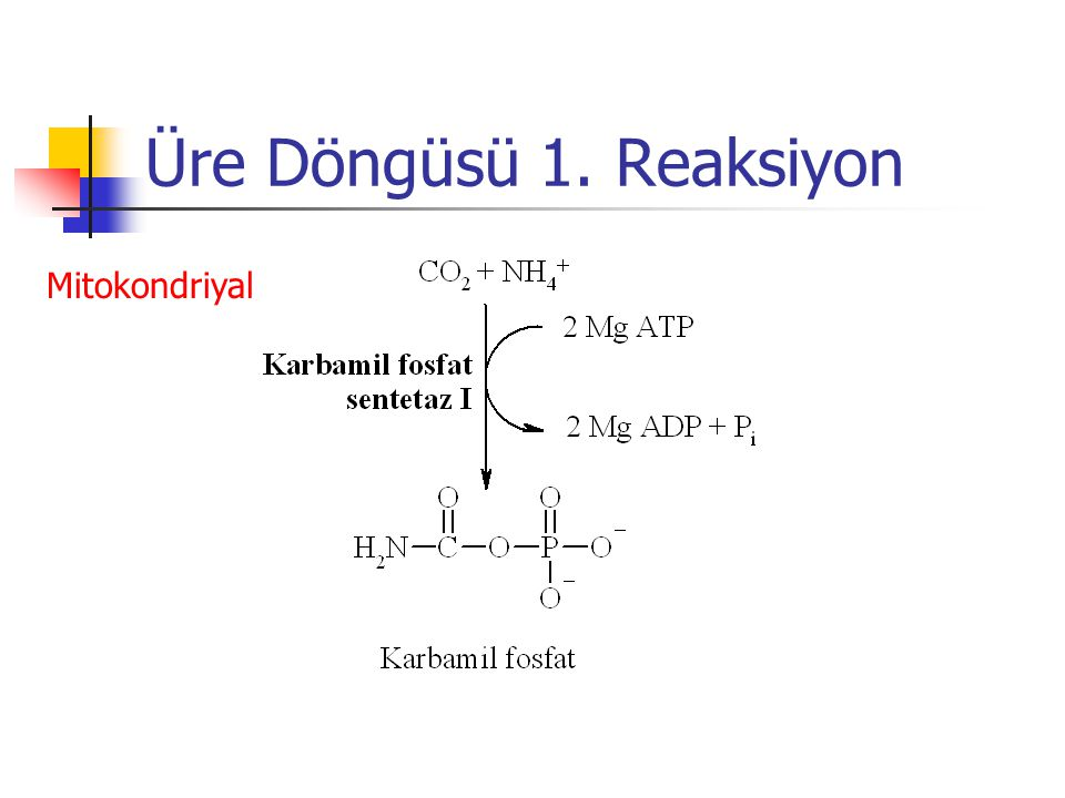 Üre Döngüsü 1. Reaksiyon Mitokondriyal