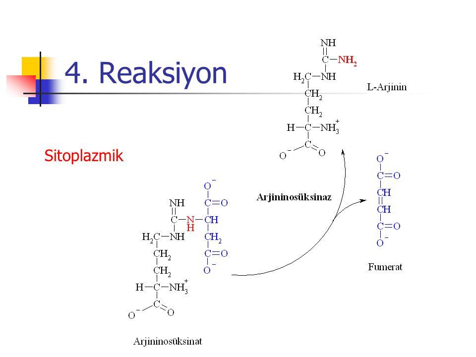 4. Reaksiyon Sitoplazmik