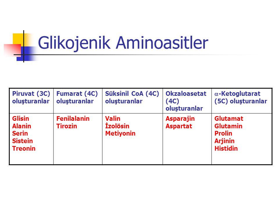 Glikojenik Aminoasitler