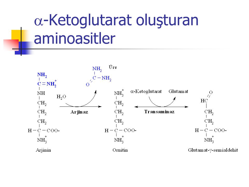 a-Ketoglutarat oluşturan aminoasitler
