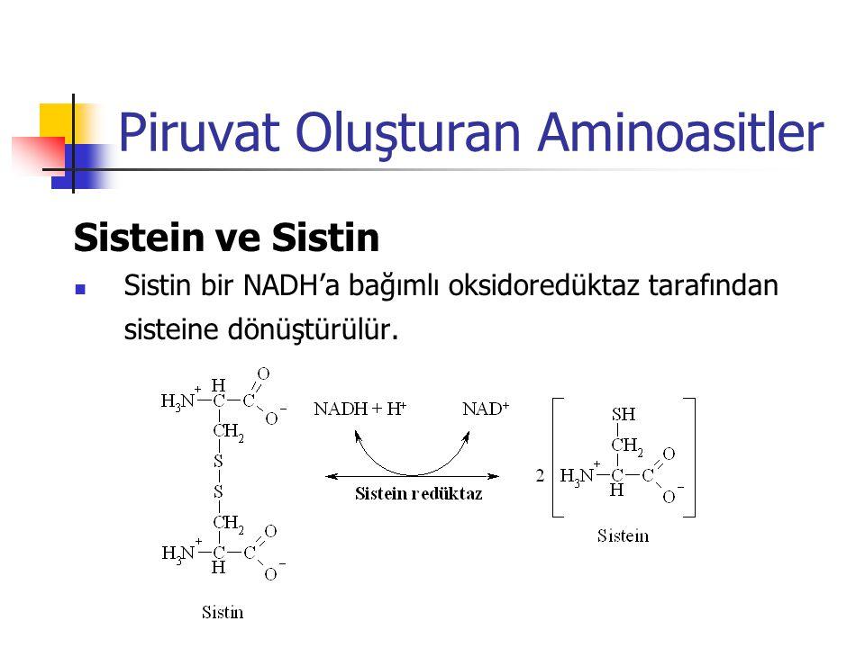Piruvat Oluşturan Aminoasitler