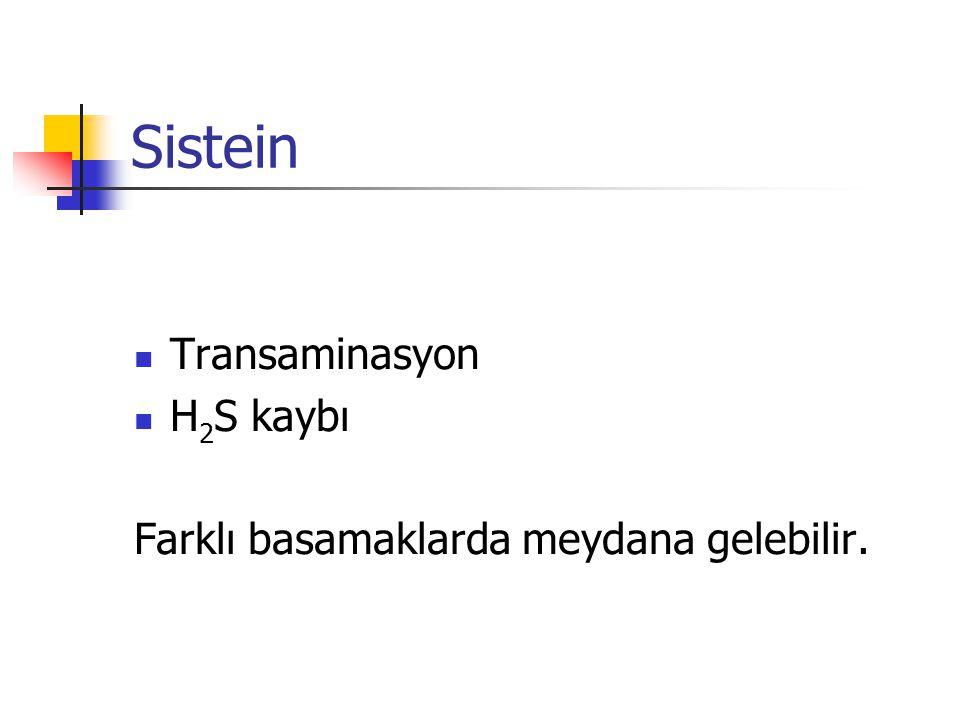 Sistein Transaminasyon H2S kaybı
