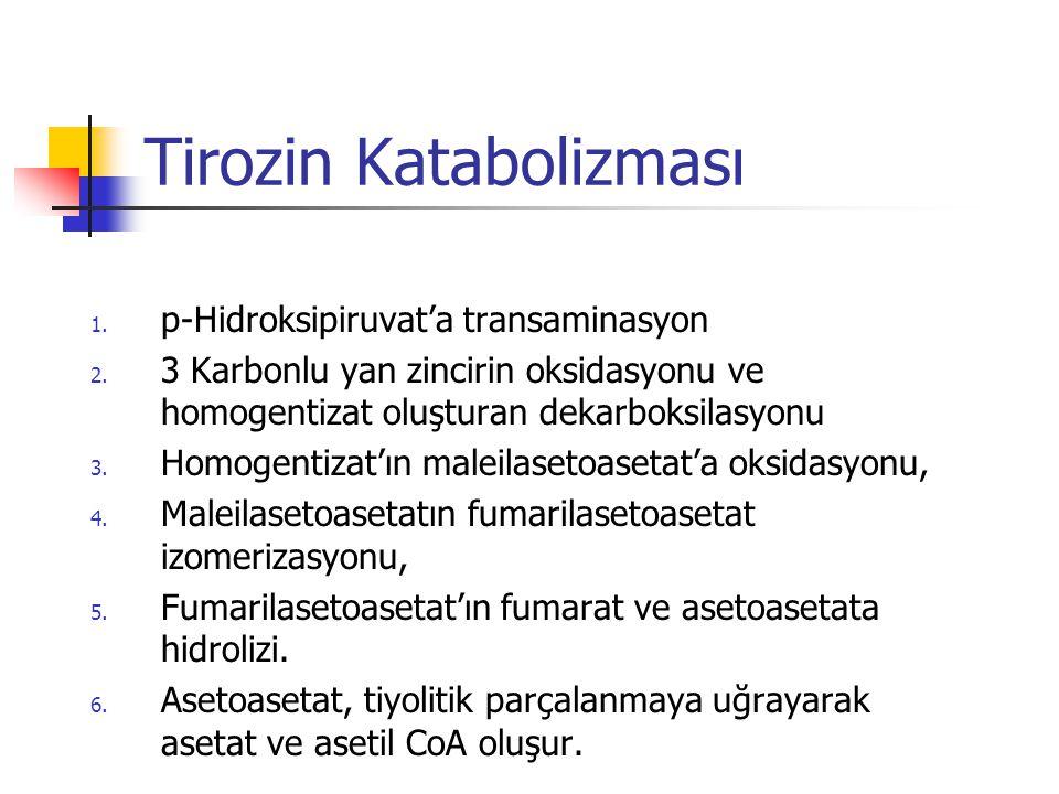 Tirozin Katabolizması