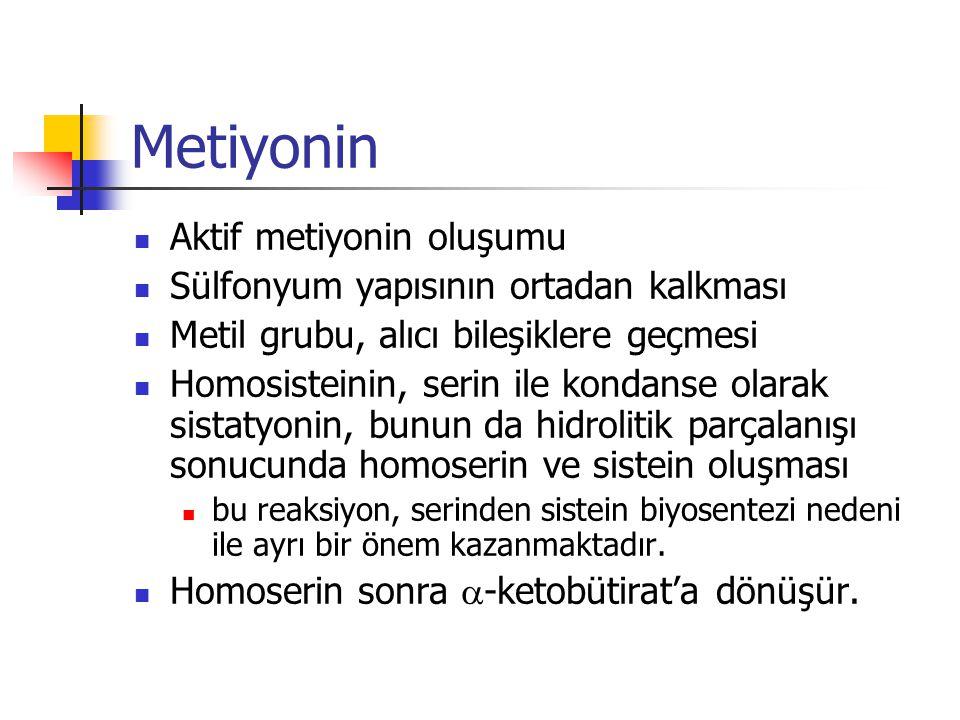 Metiyonin Aktif metiyonin oluşumu Sülfonyum yapısının ortadan kalkması