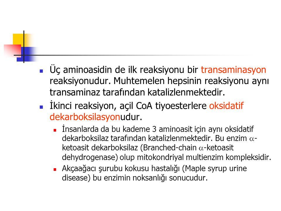 Üç aminoasidin de ilk reaksiyonu bir transaminasyon reaksiyonudur
