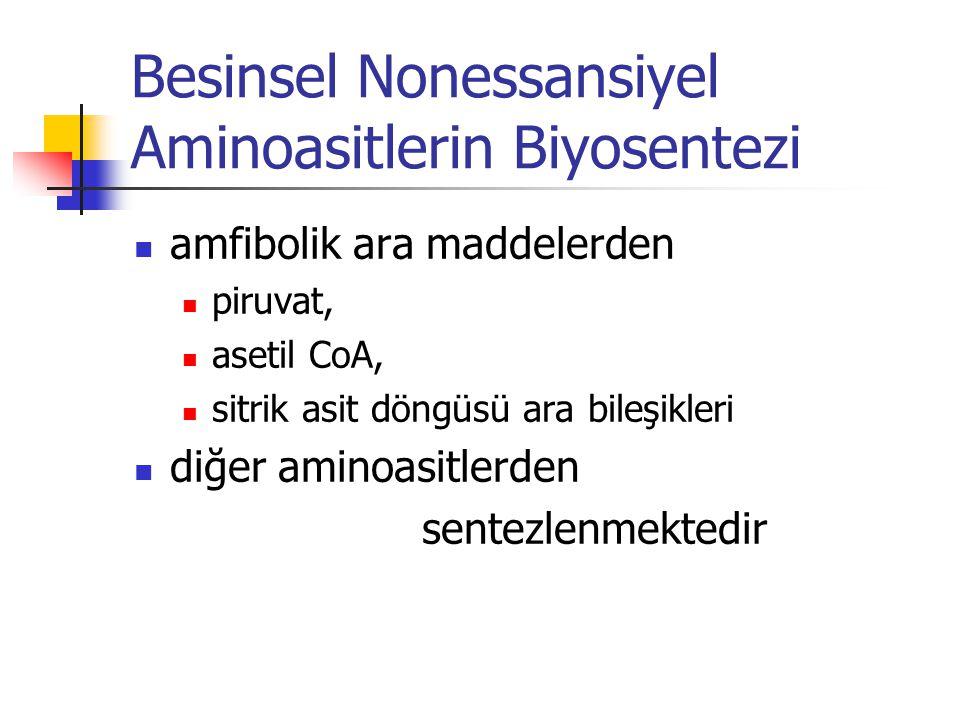 Besinsel Nonessansiyel Aminoasitlerin Biyosentezi