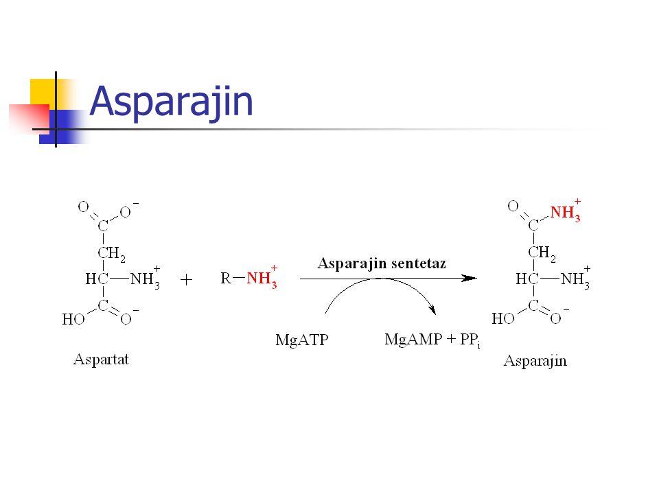 Asparajin
