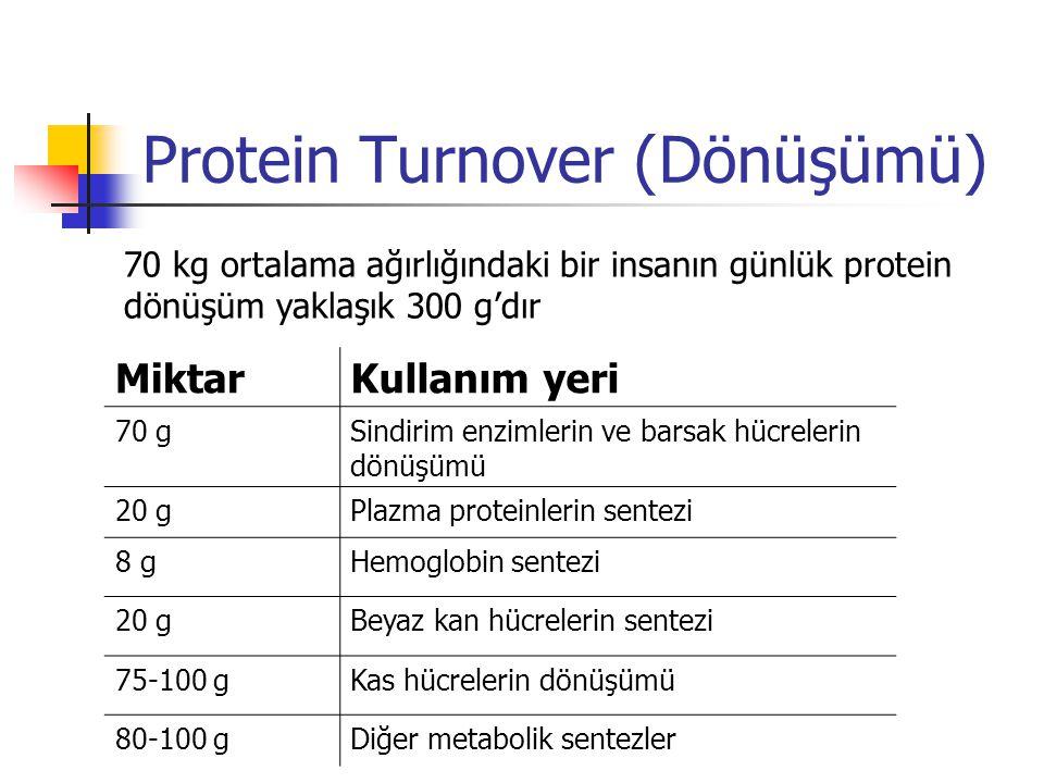 Protein Turnover (Dönüşümü)