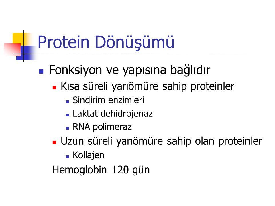 Protein Dönüşümü Fonksiyon ve yapısına bağlıdır