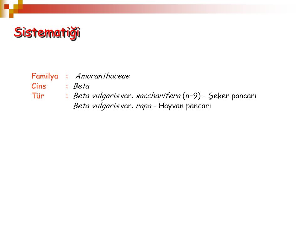 Sistematiği Familya : Amaranthaceae Cins : Beta