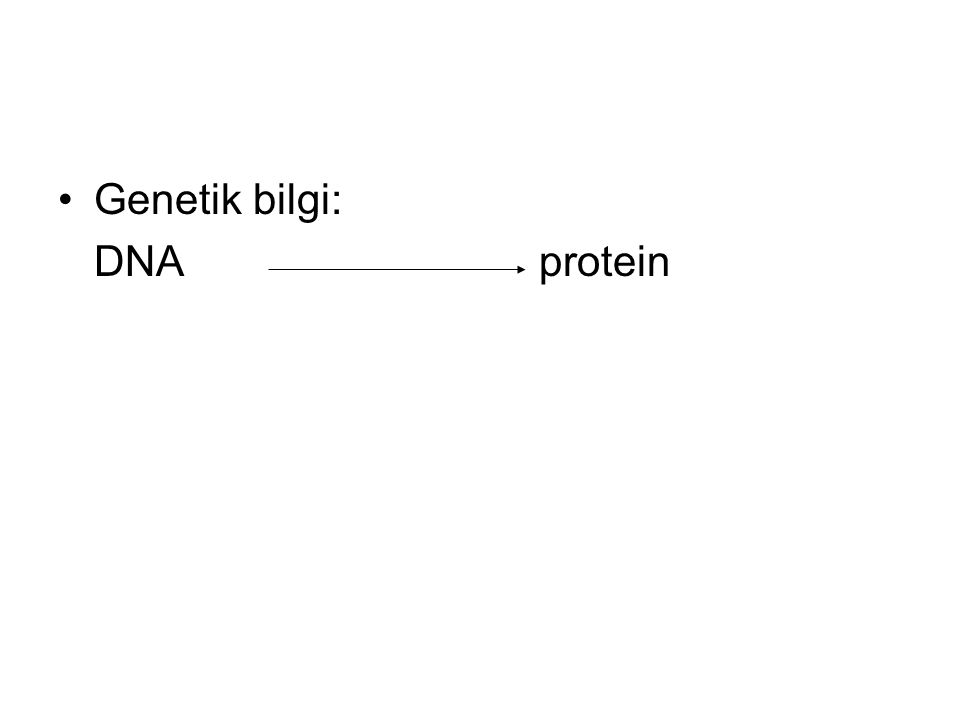 Genetik bilgi: DNA protein