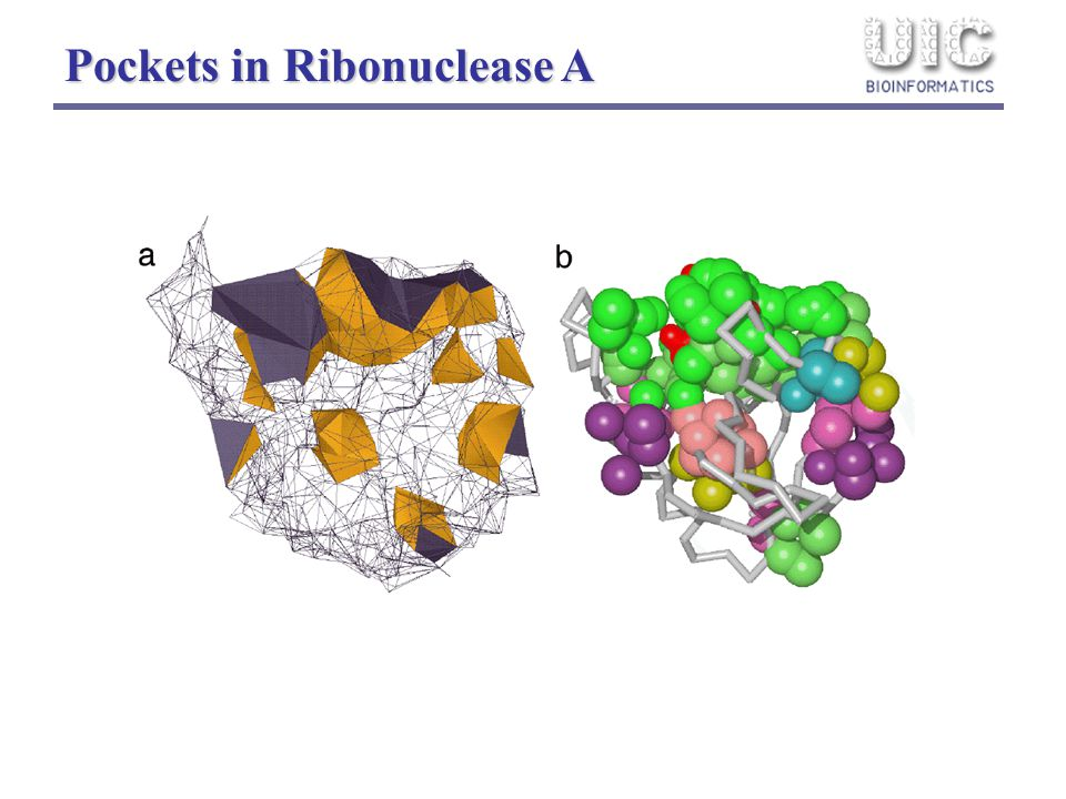 Pockets in Ribonuclease A