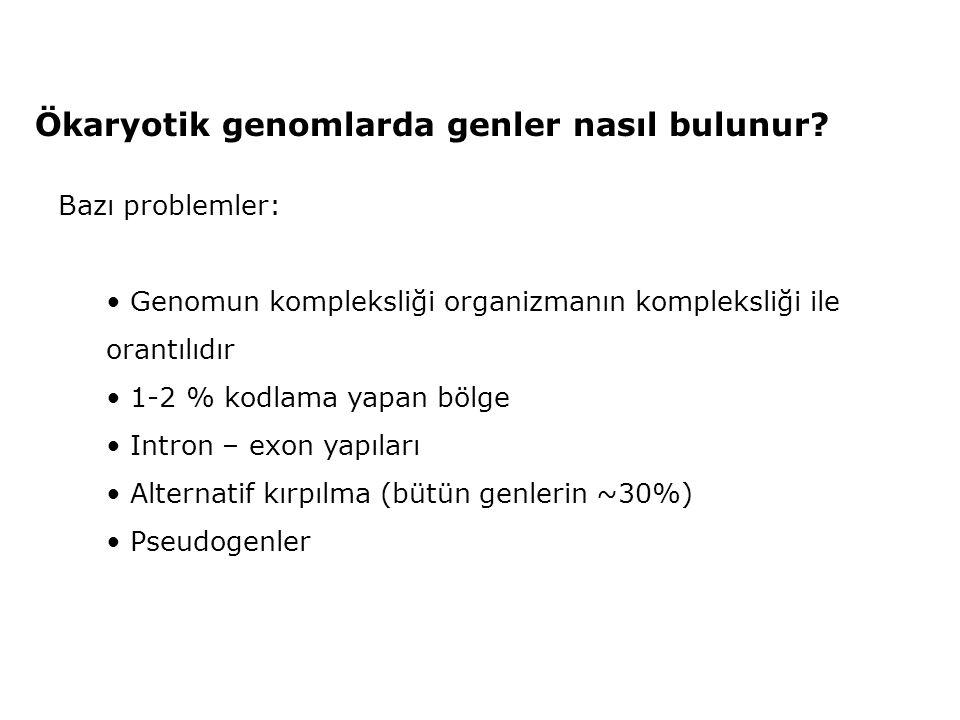 Ökaryotik genomlarda genler nasıl bulunur