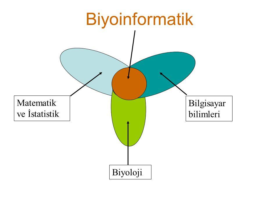 Biyoinformatik Matematik ve İstatistik Bilgisayar bilimleri Biyoloji