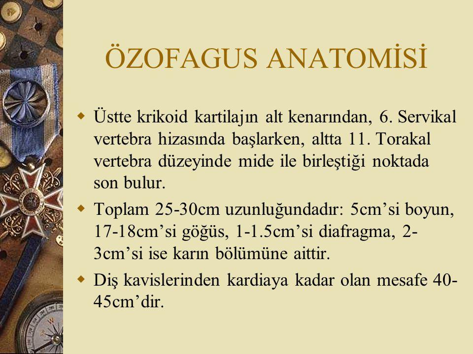 ÖZOFAGUS ANATOMİSİ