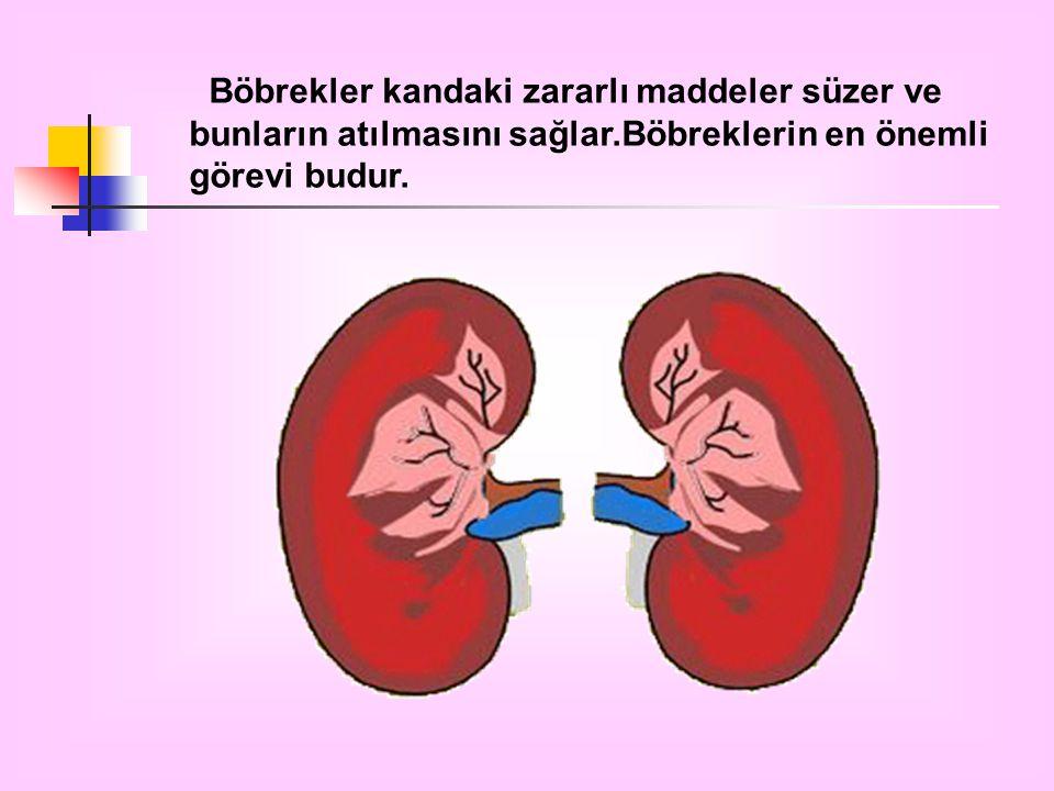 Böbrekler kandaki zararlı maddeler süzer ve