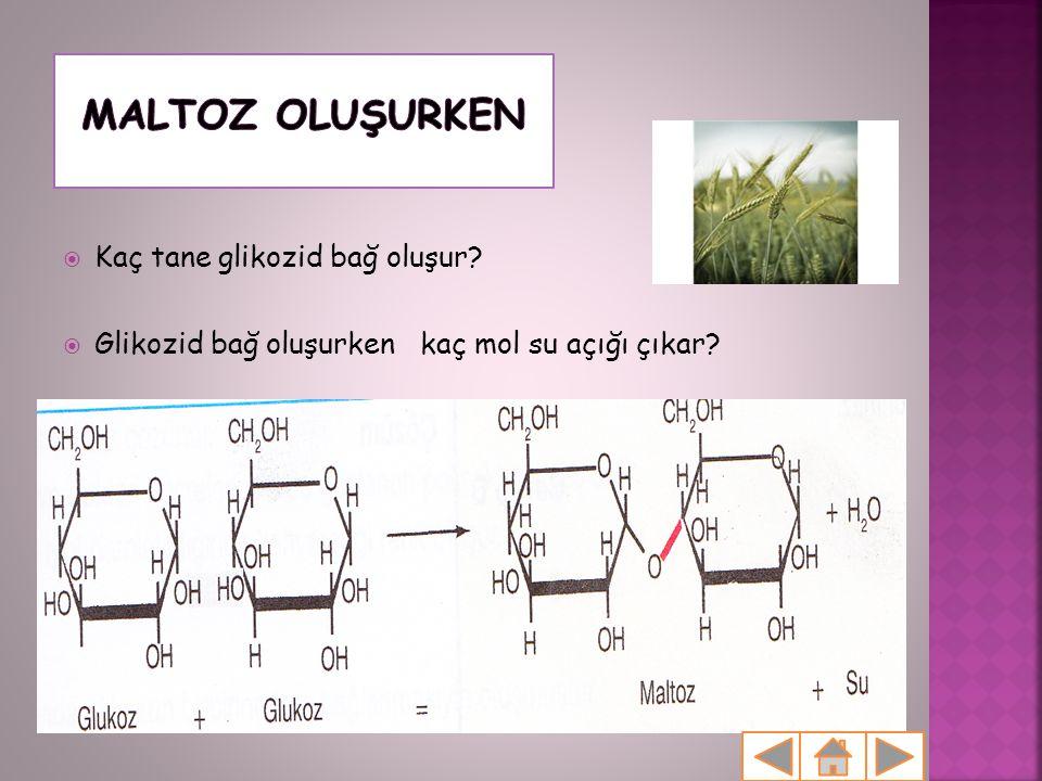 Maltoz oluşurken Kaç tane glikozid bağ oluşur