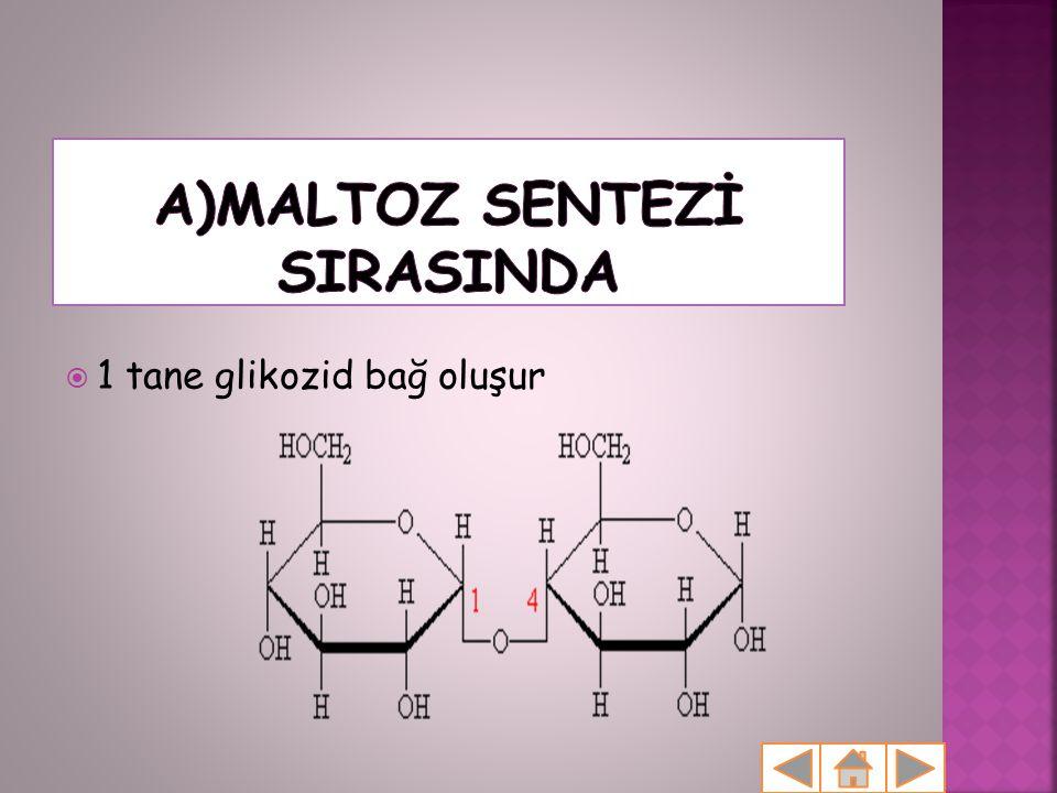 A)MALTOZ SENTEZİ SIRASINDA