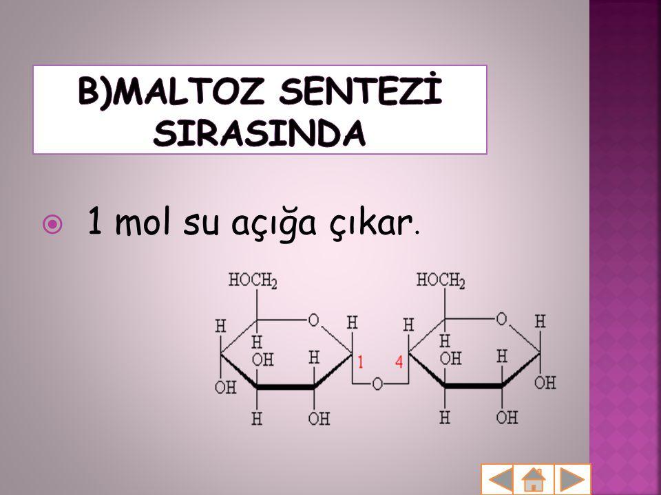B)MALTOZ SENTEZİ SIRASINDA