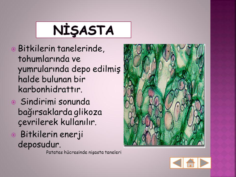 Nİşasta Bitkilerin tanelerinde, tohumlarında ve yumrularında depo edilmiş halde bulunan bir karbonhidrattır.