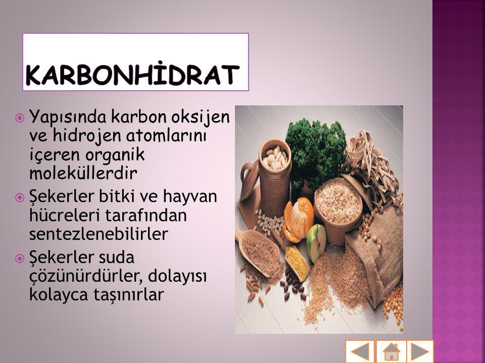 KARBONHİDRAT Yapısında karbon oksijen ve hidrojen atomlarını içeren organik moleküllerdir.