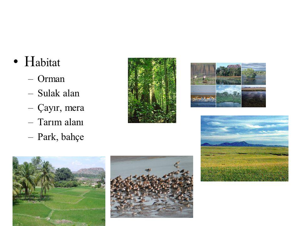 Habitat Orman Sulak alan Çayır, mera Tarım alanı Park, bahçe