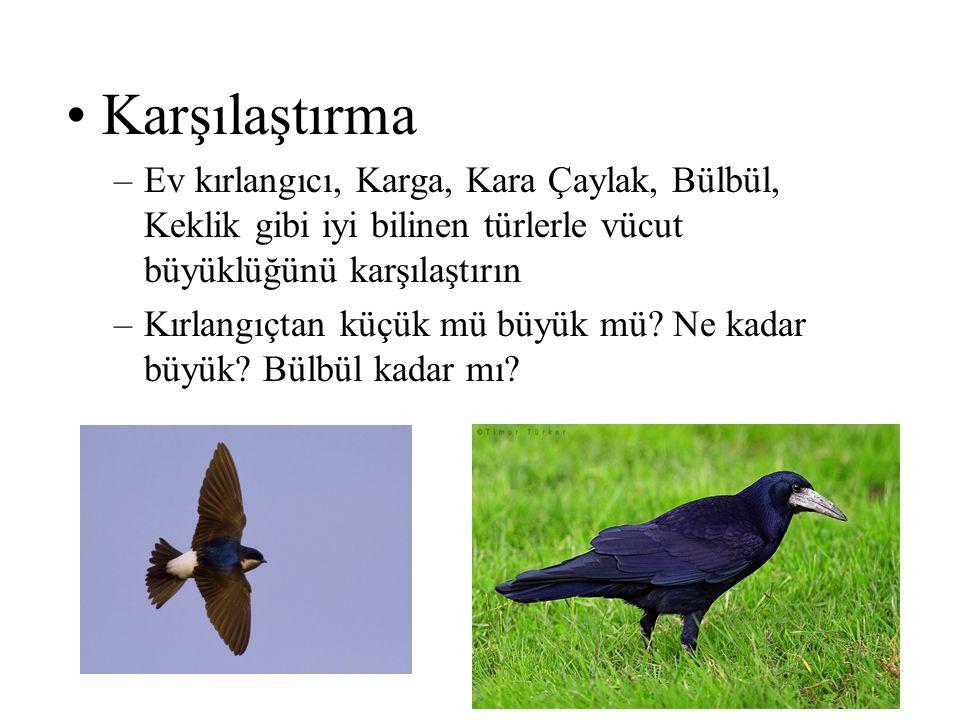Karşılaştırma Ev kırlangıcı, Karga, Kara Çaylak, Bülbül, Keklik gibi iyi bilinen türlerle vücut büyüklüğünü karşılaştırın.