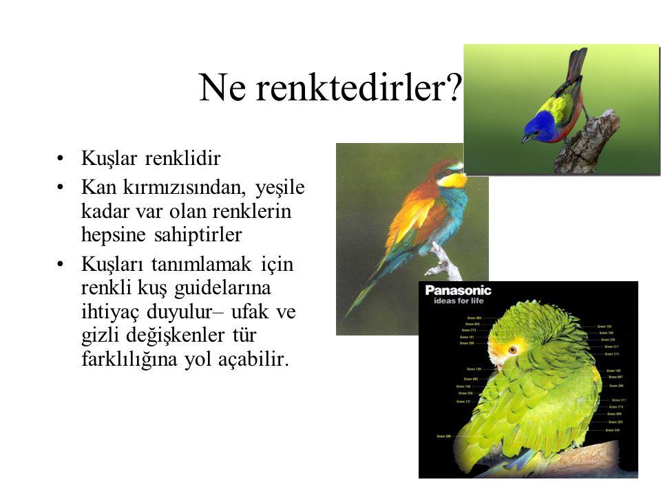 Ne renktedirler Kuşlar renklidir