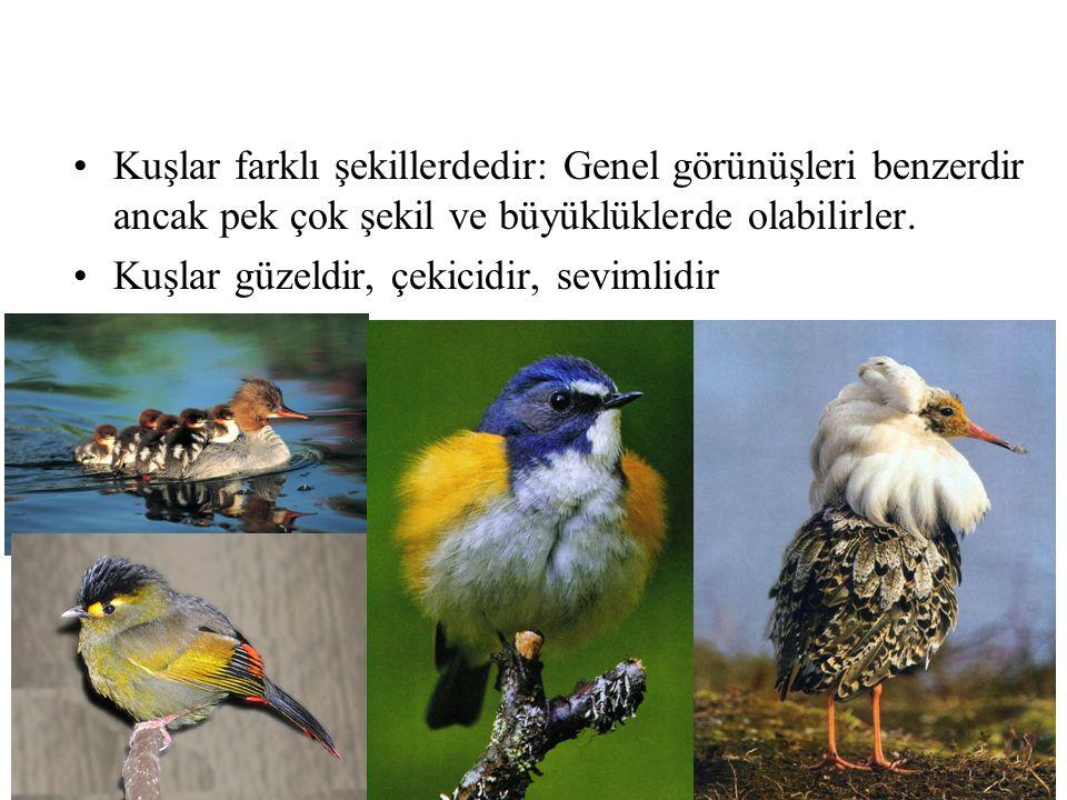 Kuşlar farklı şekillerdedir: Genel görünüşleri benzerdir ancak pek çok şekil ve büyüklüklerde olabilirler.
