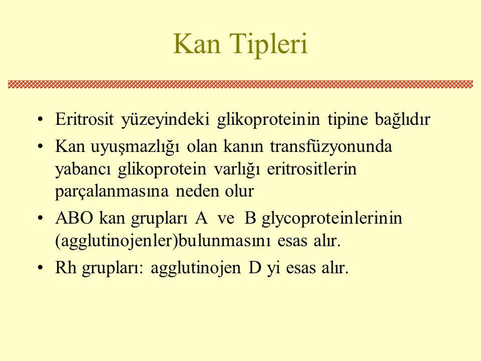 Kan Tipleri Eritrosit yüzeyindeki glikoproteinin tipine bağlıdır