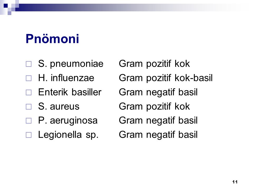 Pnömoni S. pneumoniae Gram pozitif kok