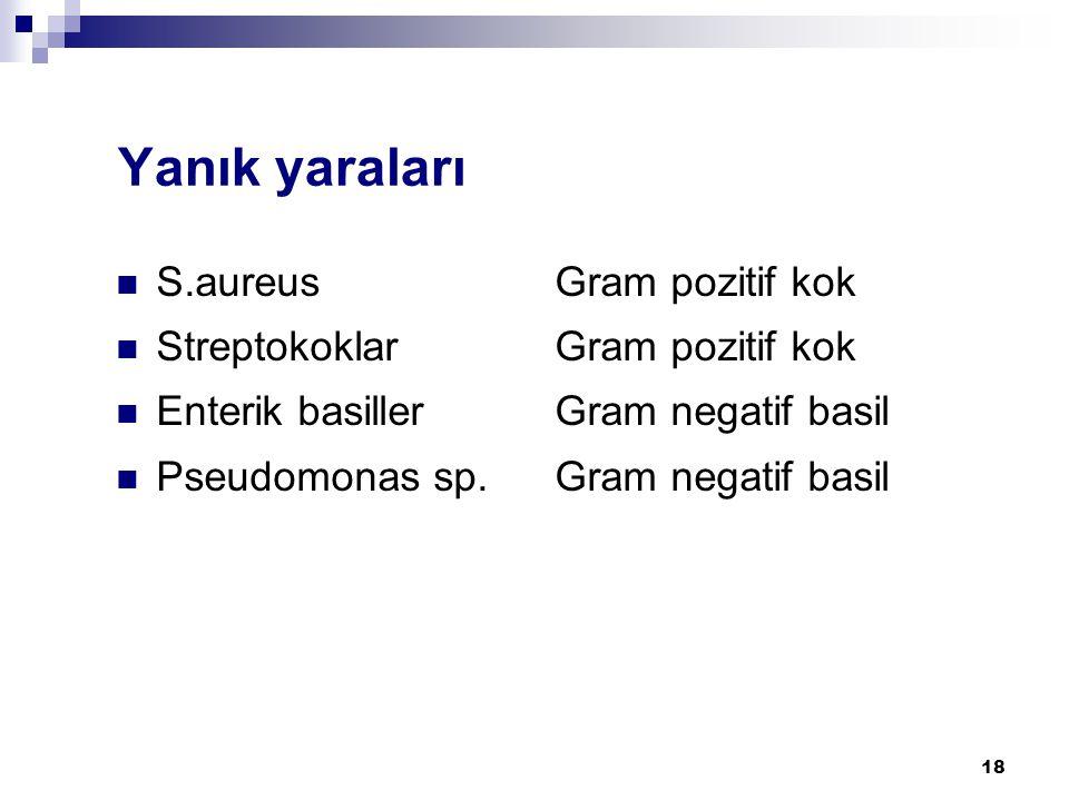 Yanık yaraları S.aureus Gram pozitif kok