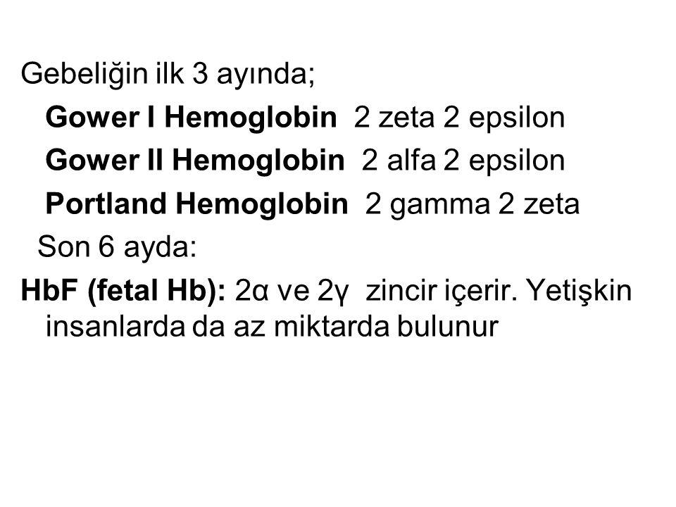 Gebeliğin ilk 3 ayında; Gower I Hemoglobin 2 zeta 2 epsilon. Gower II Hemoglobin 2 alfa 2 epsilon.