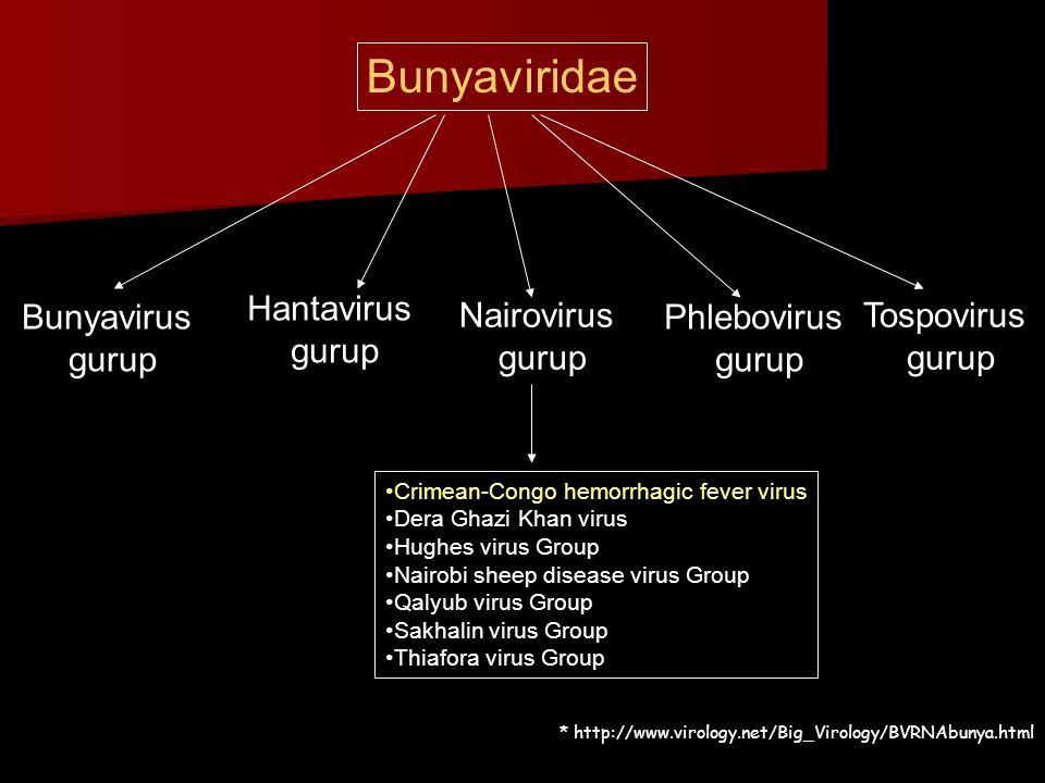 Bunyaviridae Hantavirus gurup Bunyavirus gurup Nairovirus gurup