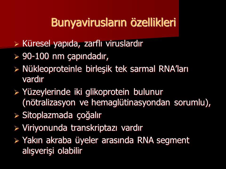 Bunyavirusların özellikleri