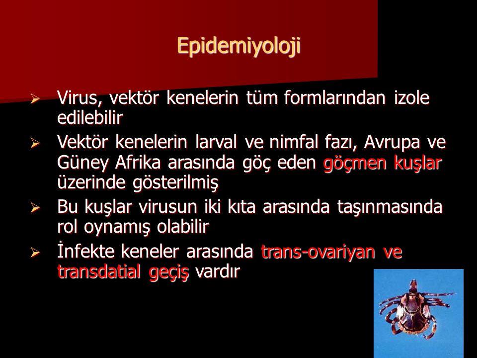 Epidemiyoloji Virus, vektör kenelerin tüm formlarından izole edilebilir.