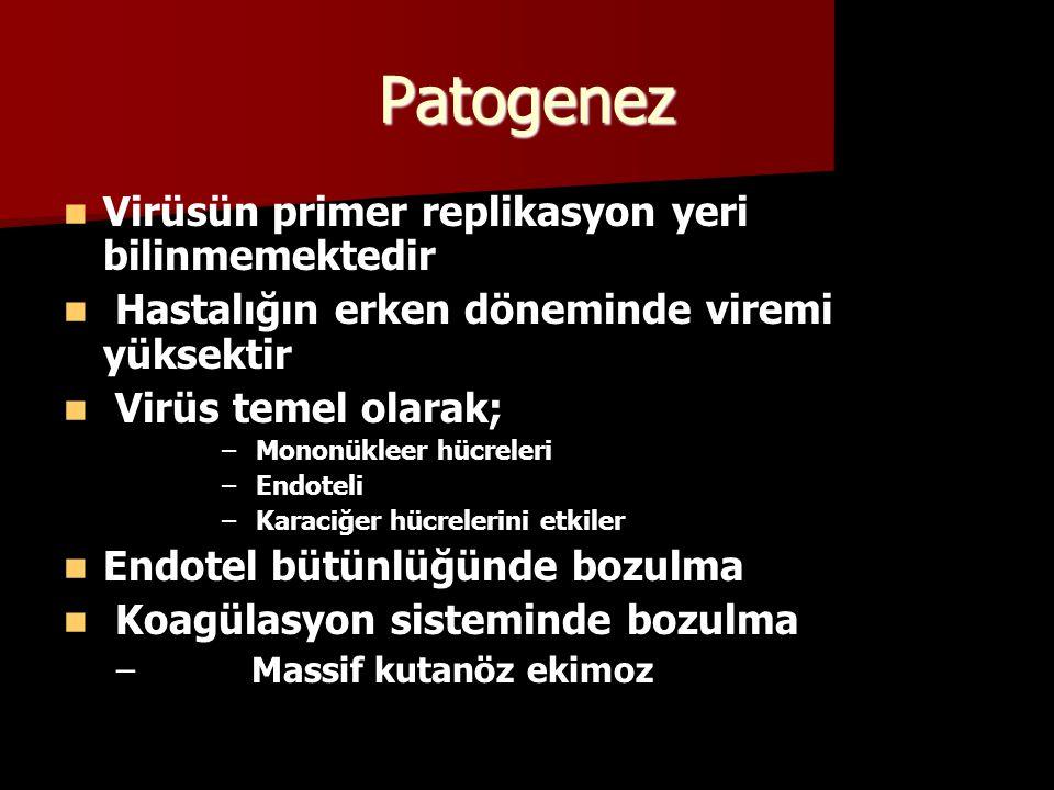Patogenez Virüsün primer replikasyon yeri bilinmemektedir