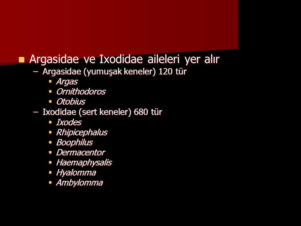 Argasidae ve Ixodidae aileleri yer alır