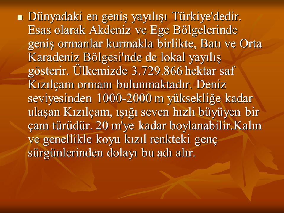 Dünyadaki en geniş yayılışı Türkiye dedir
