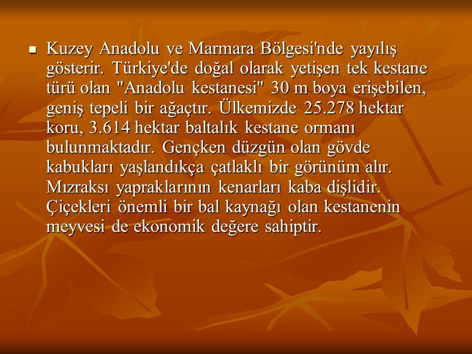 Kuzey Anadolu ve Marmara Bölgesi nde yayılış gösterir