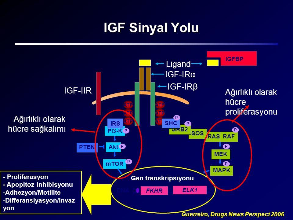 IGF Sinyal Yolu Ligand IGF-IRα IGF-IRβ IGF-IIR