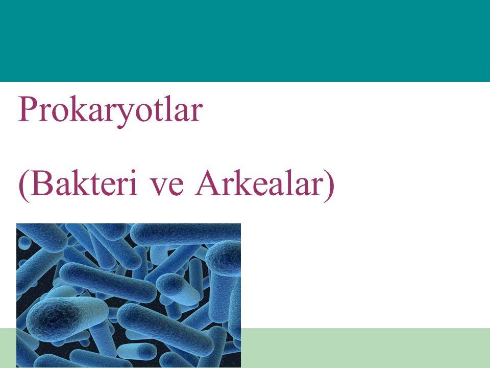Prokaryotlar (Bakteri ve Arkealar)