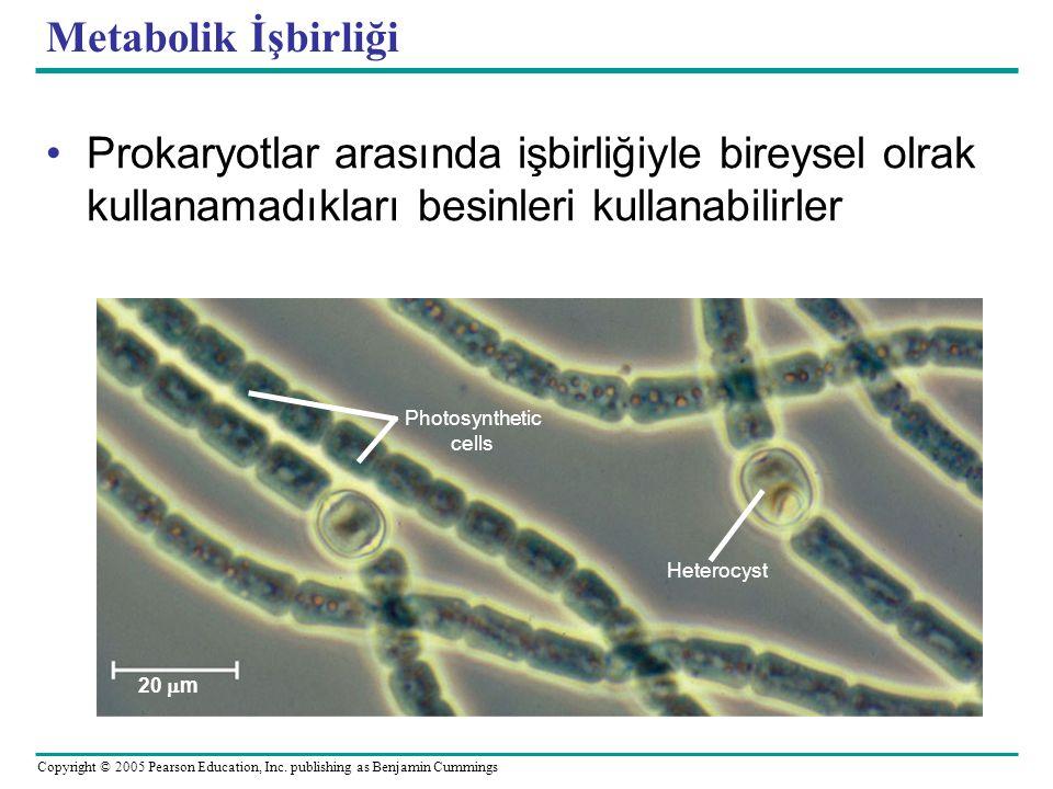 Metabolik İşbirliği Prokaryotlar arasında işbirliğiyle bireysel olrak kullanamadıkları besinleri kullanabilirler.