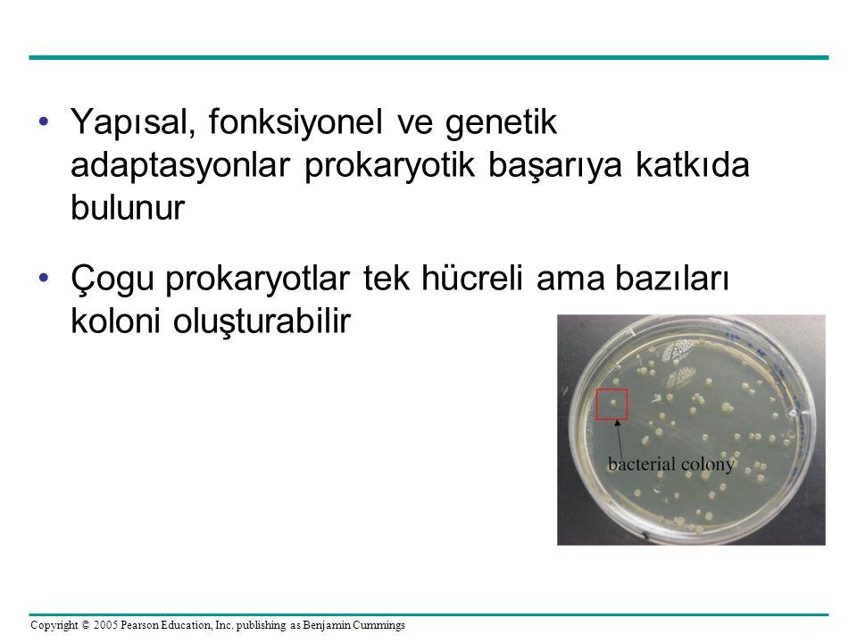 Yapısal, fonksiyonel ve genetik adaptasyonlar prokaryotik başarıya katkıda bulunur