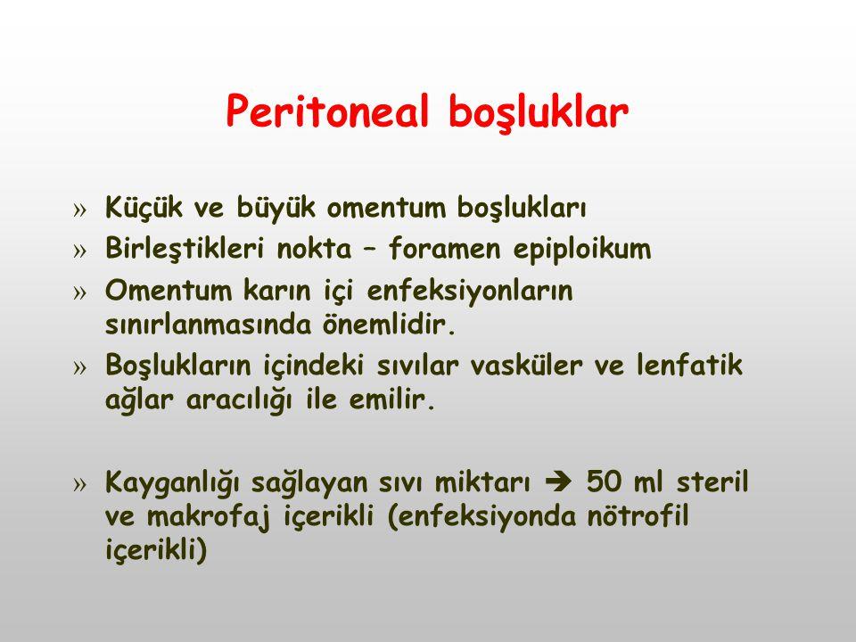 Peritoneal boşluklar Küçük ve büyük omentum boşlukları