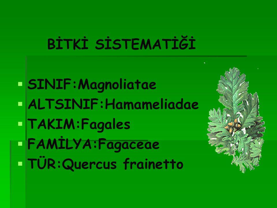 BİTKİ SİSTEMATİĞİ SINIF:Magnoliatae. ALTSINIF:Hamameliadae.
