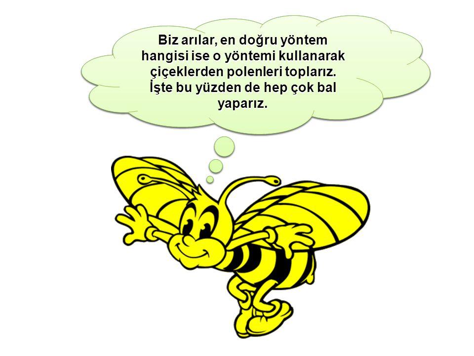 Biz arılar, en doğru yöntem hangisi ise o yöntemi kullanarak çiçeklerden polenleri toplarız. İşte bu yüzden de hep çok bal yaparız.