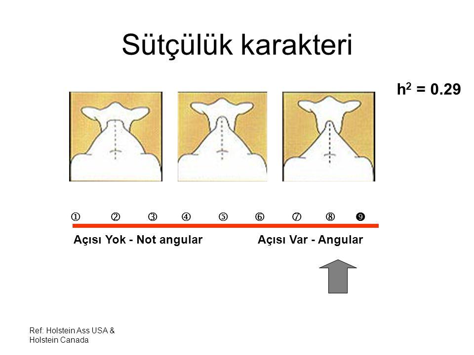 Sütçülük karakteri h2 = 0.29         