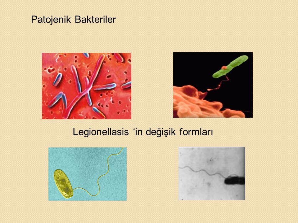 Patojenik Bakteriler Legionellasis 'in değişik formları