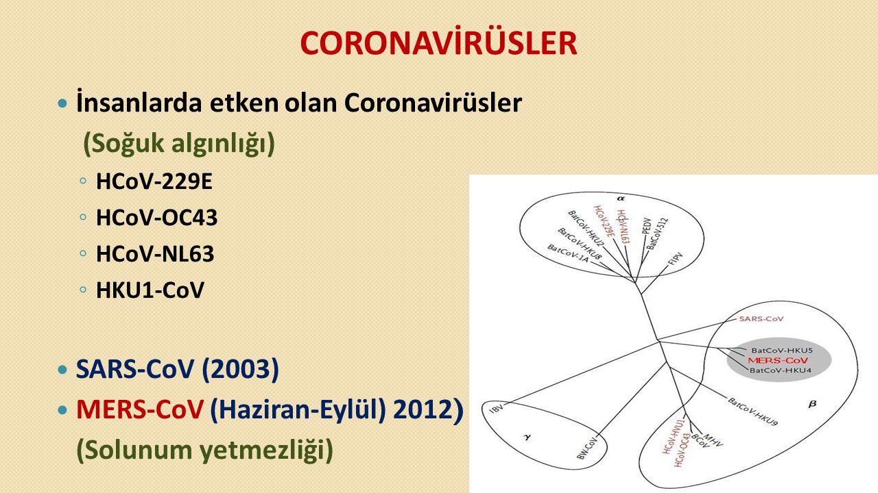 CORONAVİRÜSLER İnsanlarda etken olan Coronavirüsler (Soğuk algınlığı)